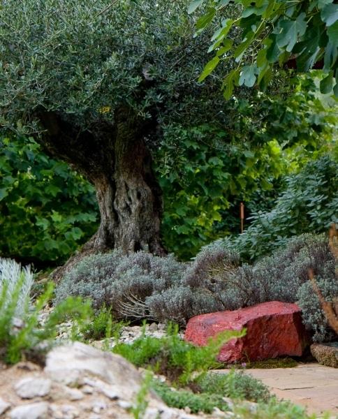 gartengestaltung-mediterran-steingarten-zuerich-3771