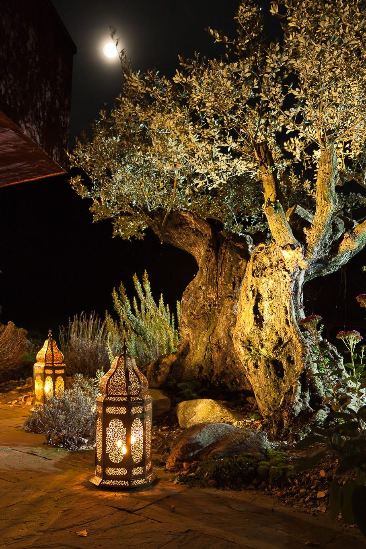 Mediterraner garten terza natura gartenjuweliere for Gartengestaltung olivenbaum