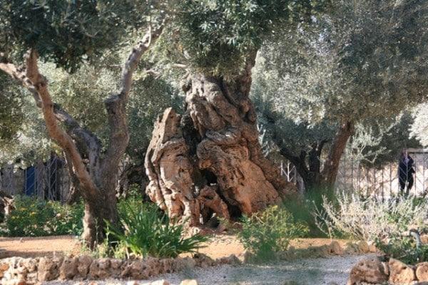 Gezemane_3 (600 x 400)