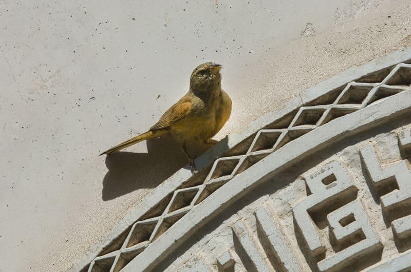 رياض  oder ein marokkanisches Riad