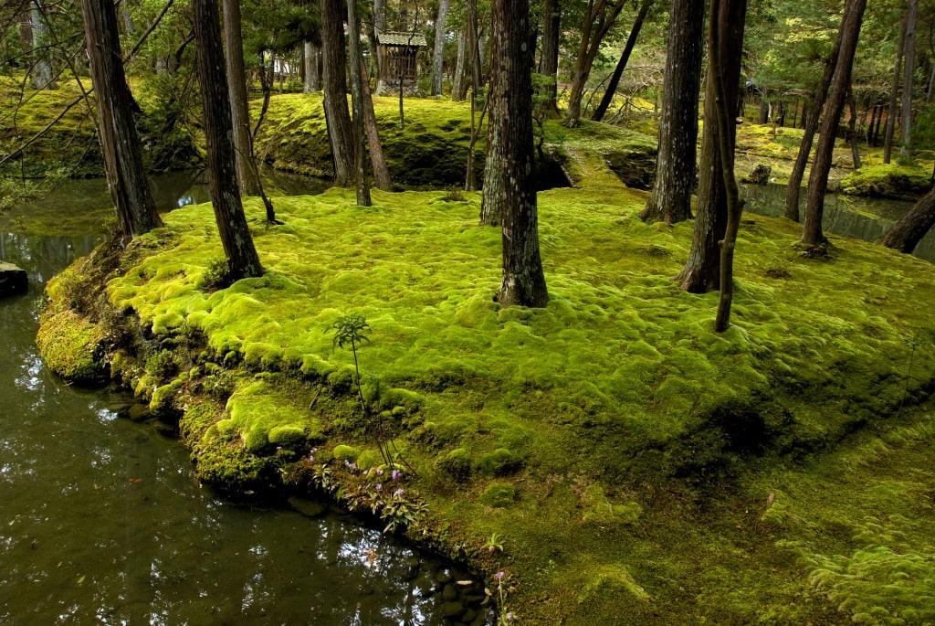 Mysterium moosgarten - Moosgarten kyoto ...