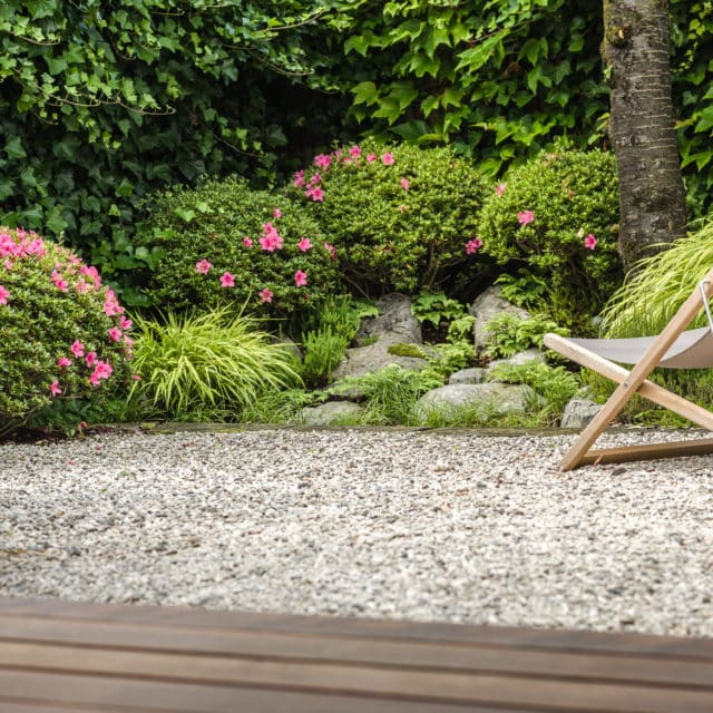 Japanische Azaleen vs Buchsbaum