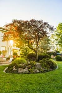 Azalea japonica (Satsuki) in einem Japanischen Garten von Terza Natura