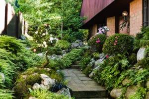 Japanische Azaleen (Azalea japonica, Satsuki) in einem Japanischen Garten von Terza Natura