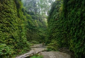 Fern Canyon near Crescent Cty